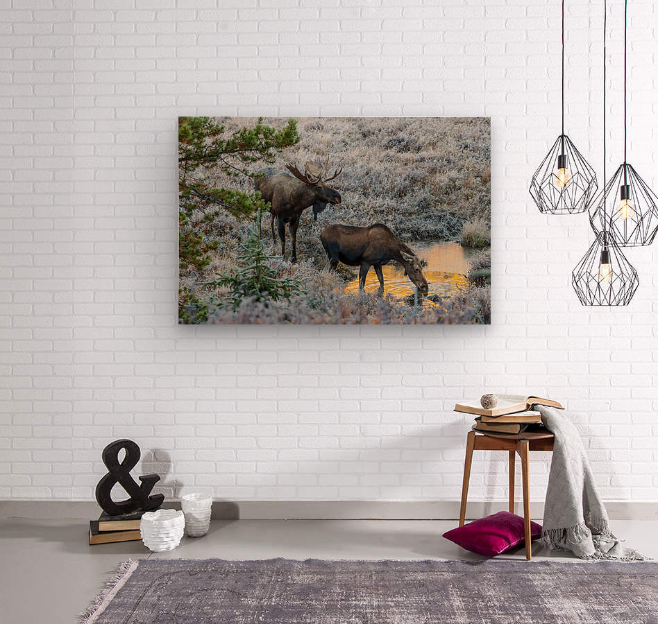 Moose On Golden Pond  Wood print
