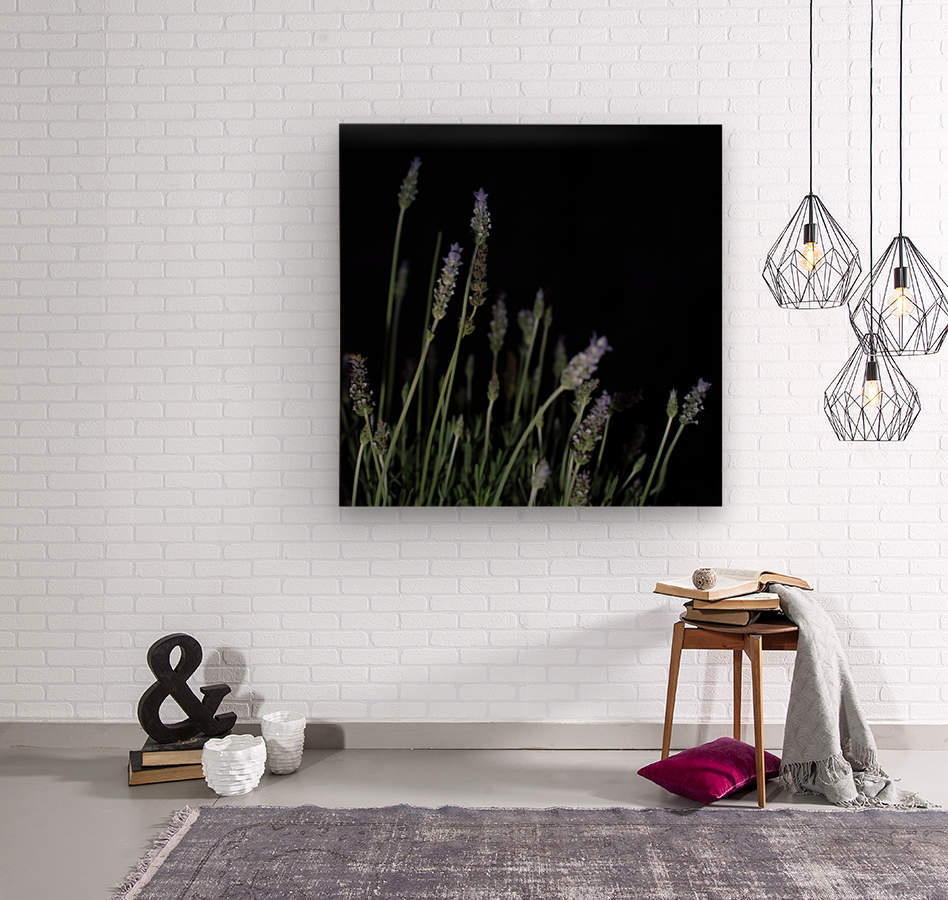 plant flower lavender black background  Wood print