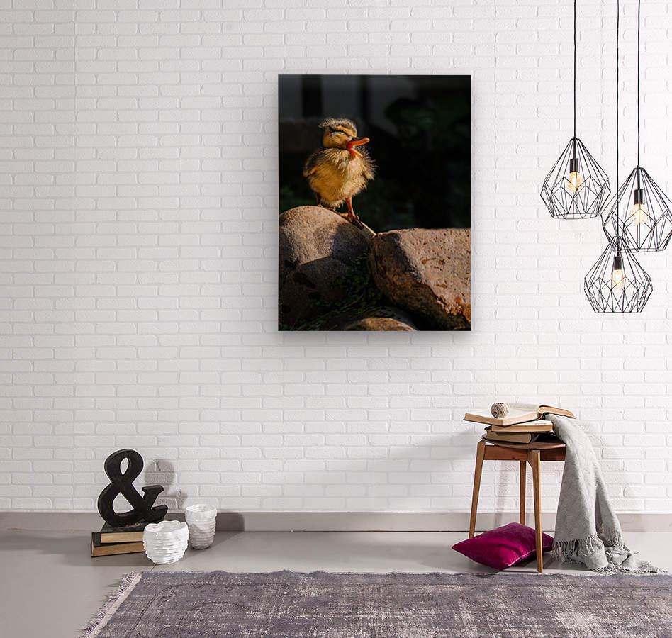 Quacking Duckling  Wood print