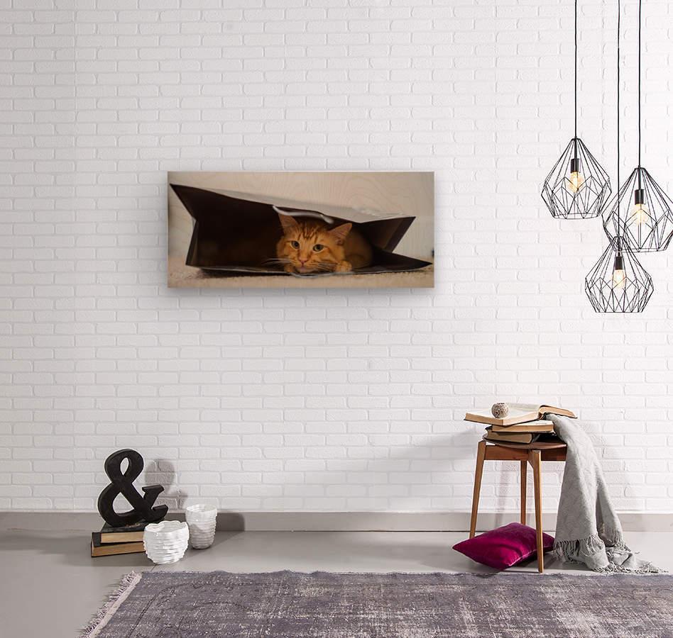 Cat In The Bag  Impression sur bois