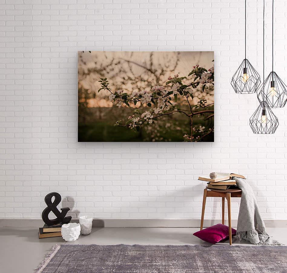 Fleurs de pommes  Impression sur bois