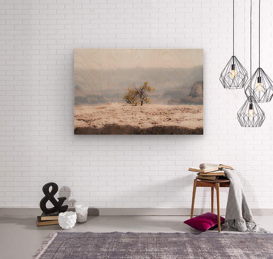 Desert Shrub Grand Canyon 2  Wood print