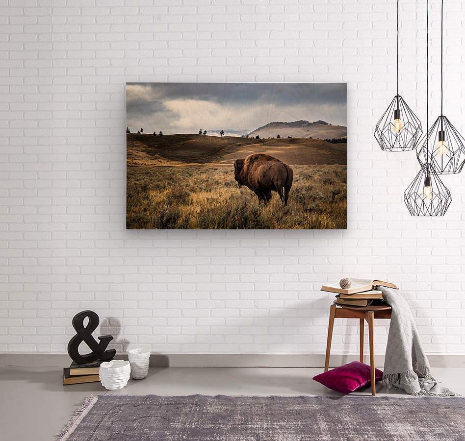 Stormy Bison  Wood print