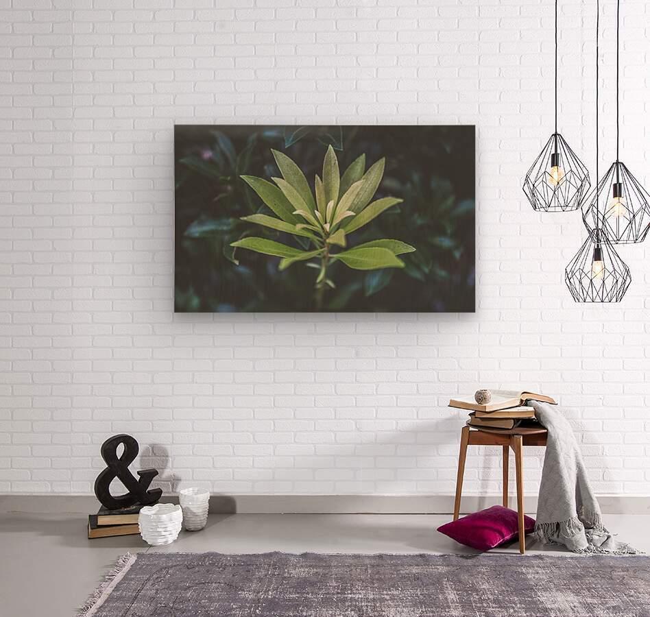 Bamboo shoots  Wood print