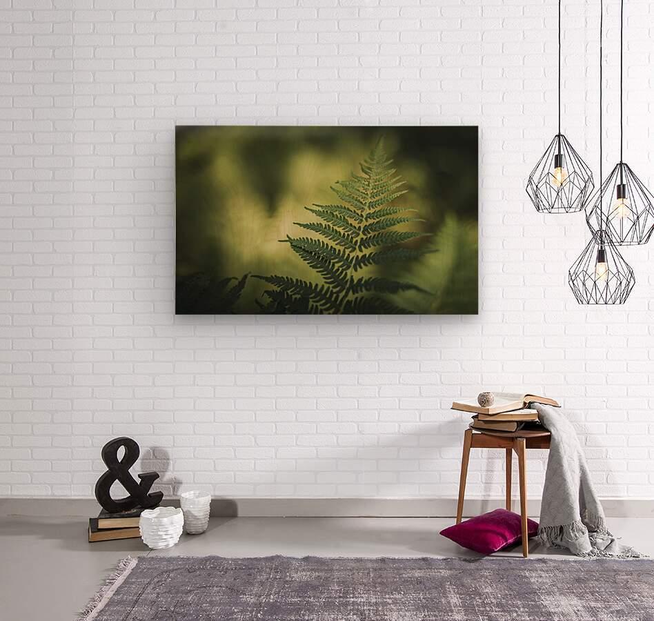 Green as the fern   Wood print