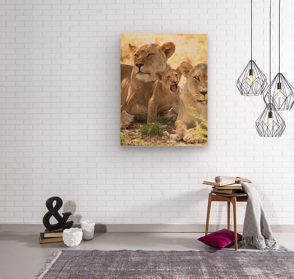 AdriaanPrinsloo 6659  Wood print