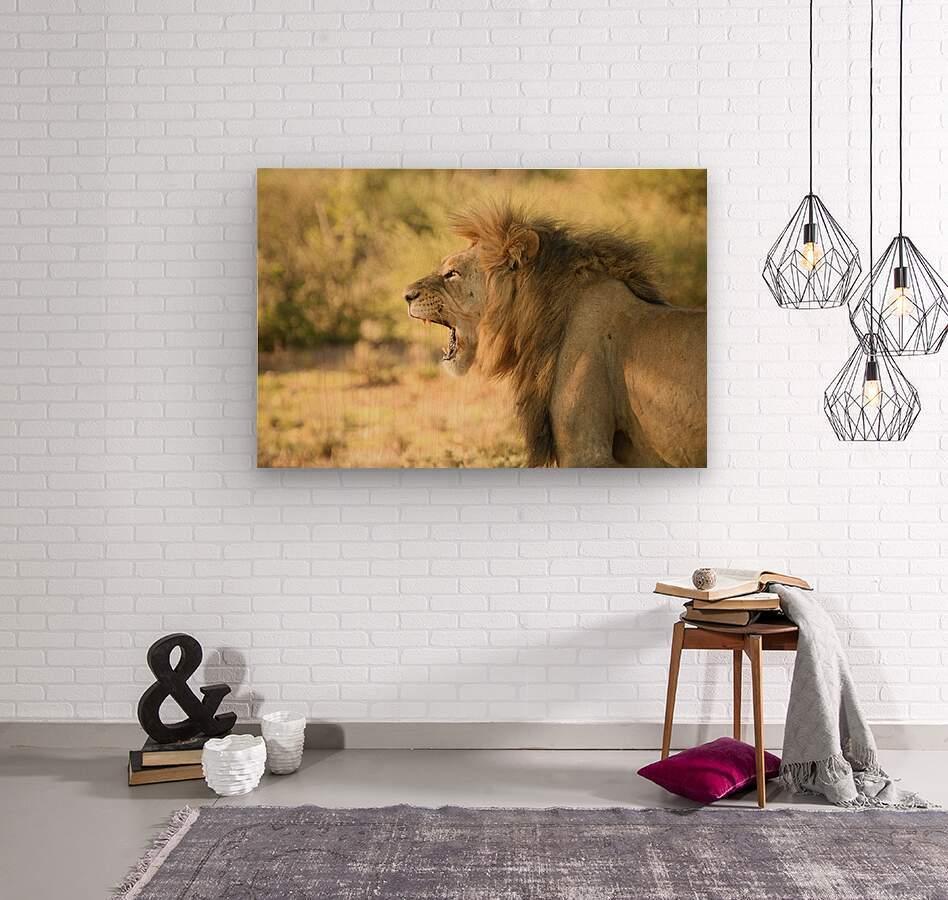 AdriaanPrinsloo 6942  Wood print