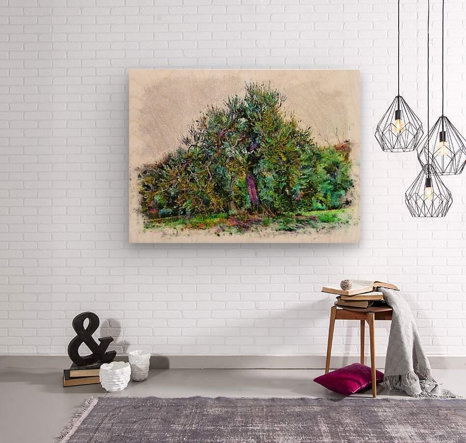 Cascading Olive Tree  Wood print