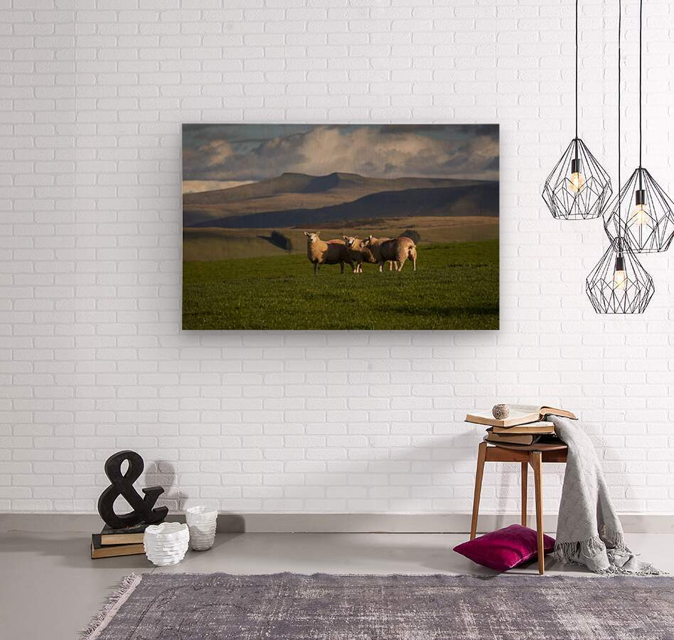 Sheep on the Brecon Beacons  Wood print