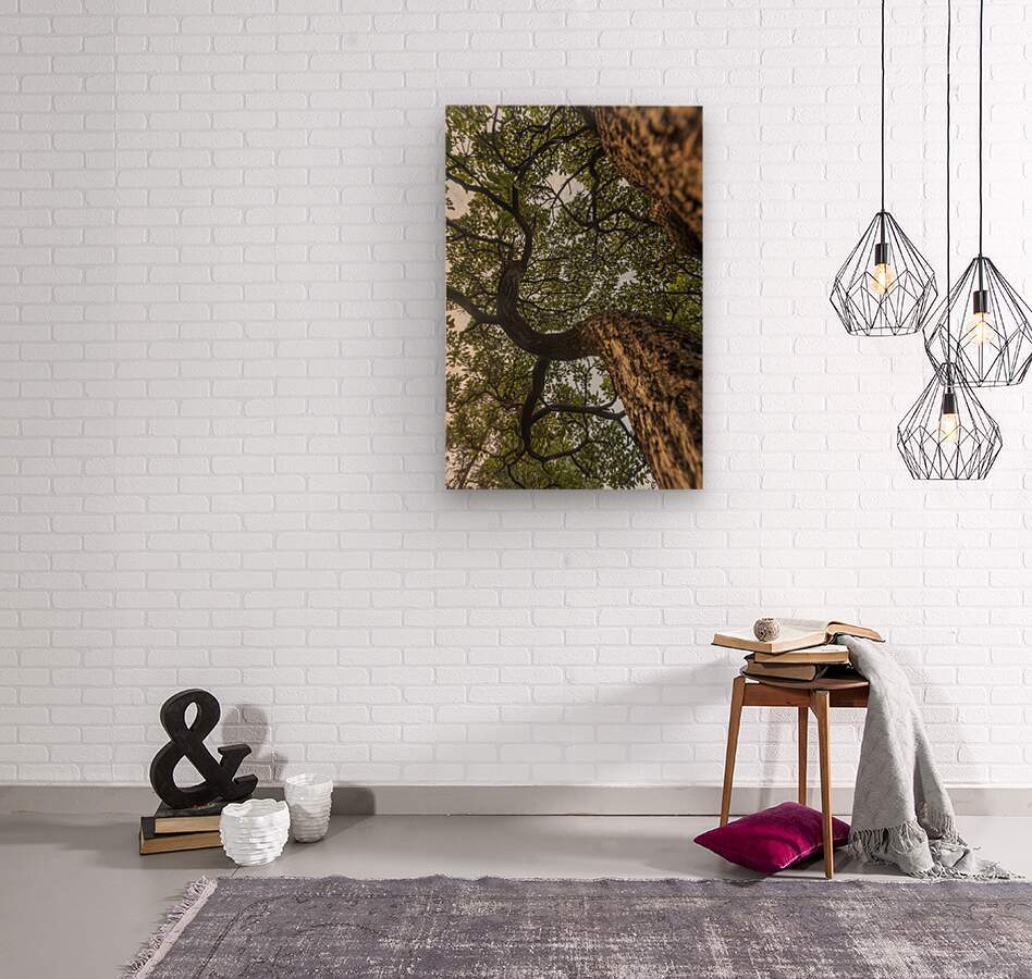 Resilience - Spiral Vertical  Wood print