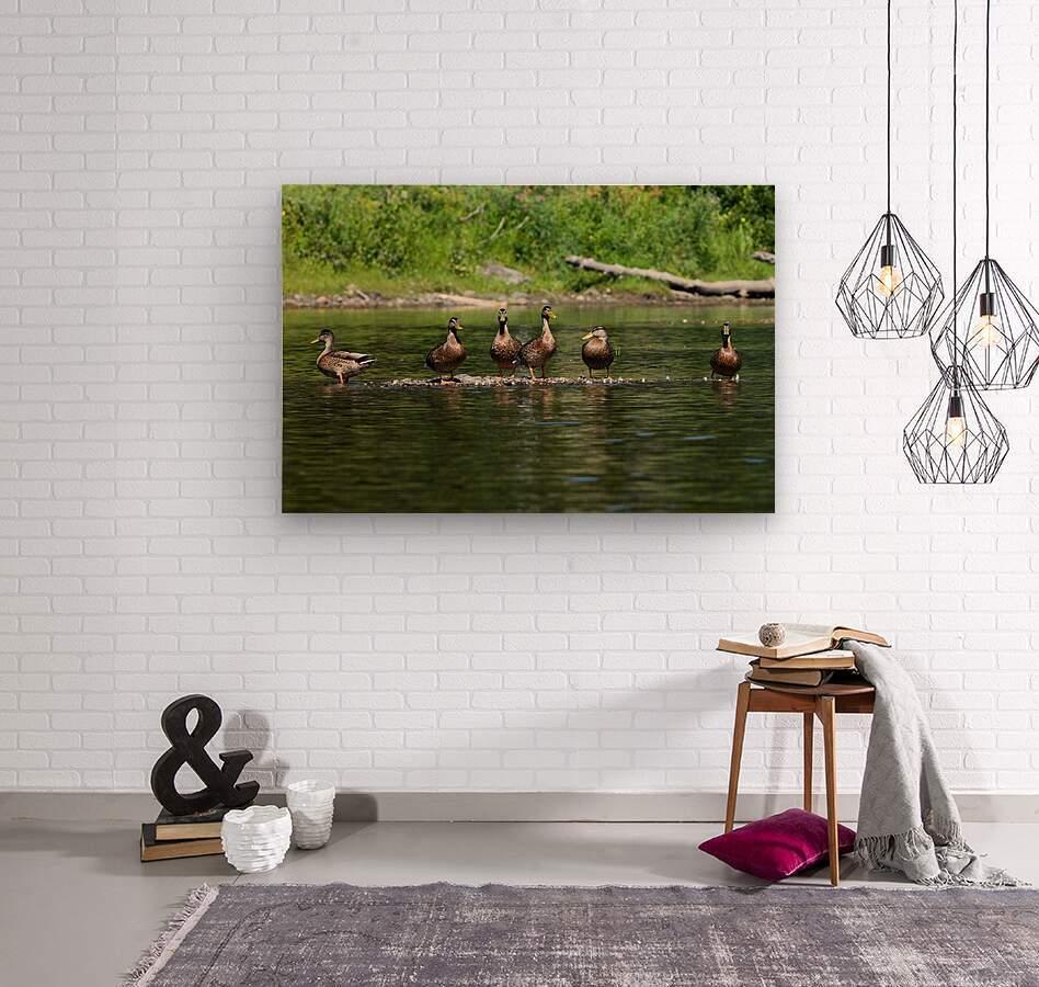 What the duck  Impression sur bois