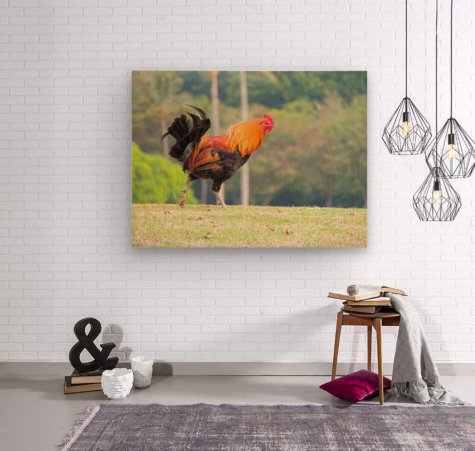 Red Rooster  Wood print