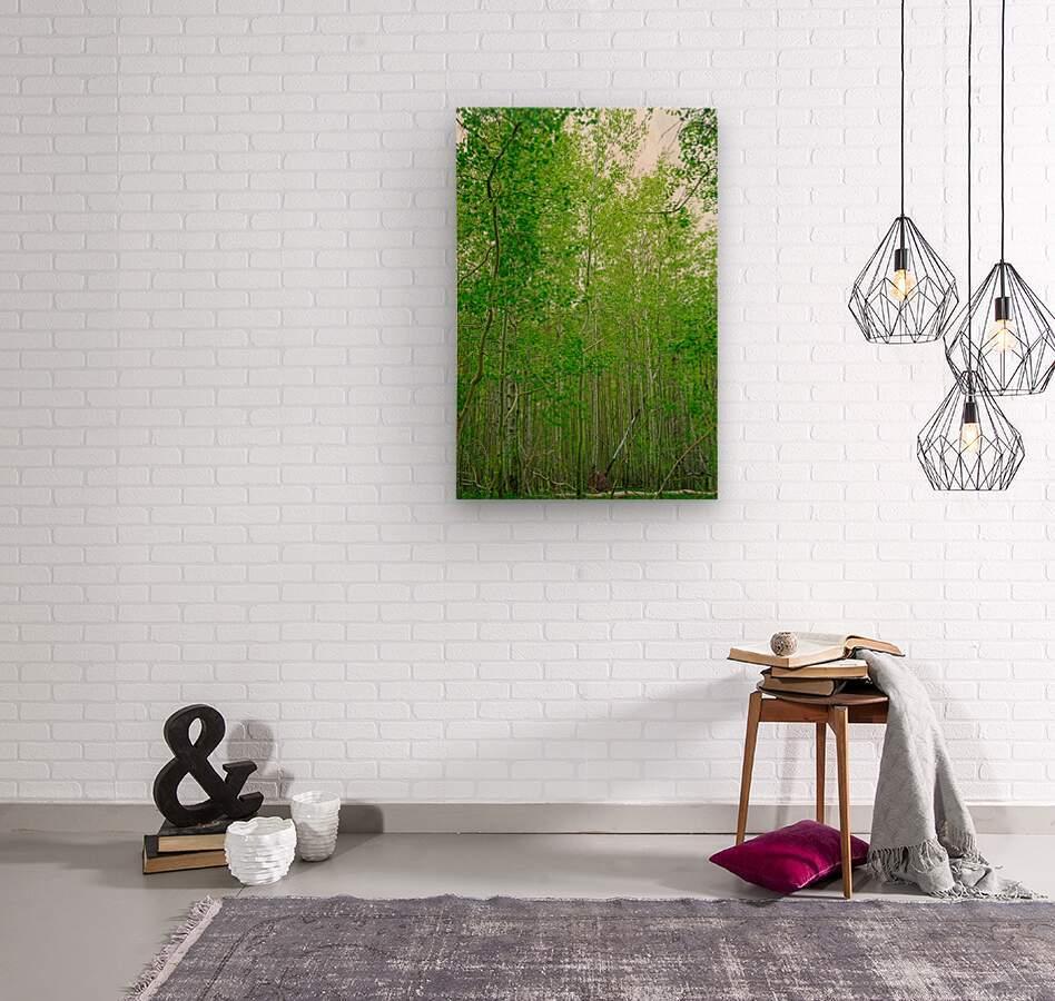 In Vail  Wood print