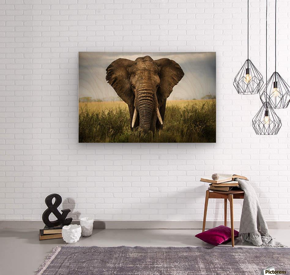 Encounters in Serengeti  Wood print