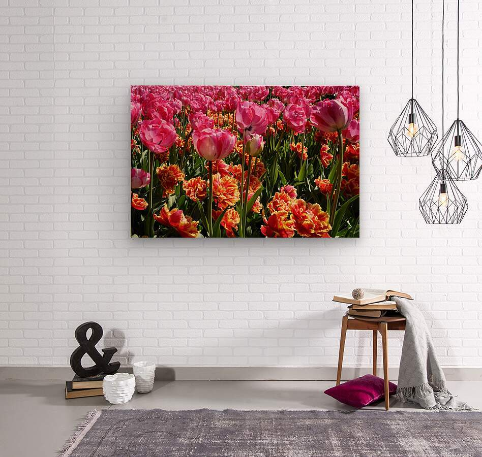 Tulips of the Netherlands 3 of 7  Wood print