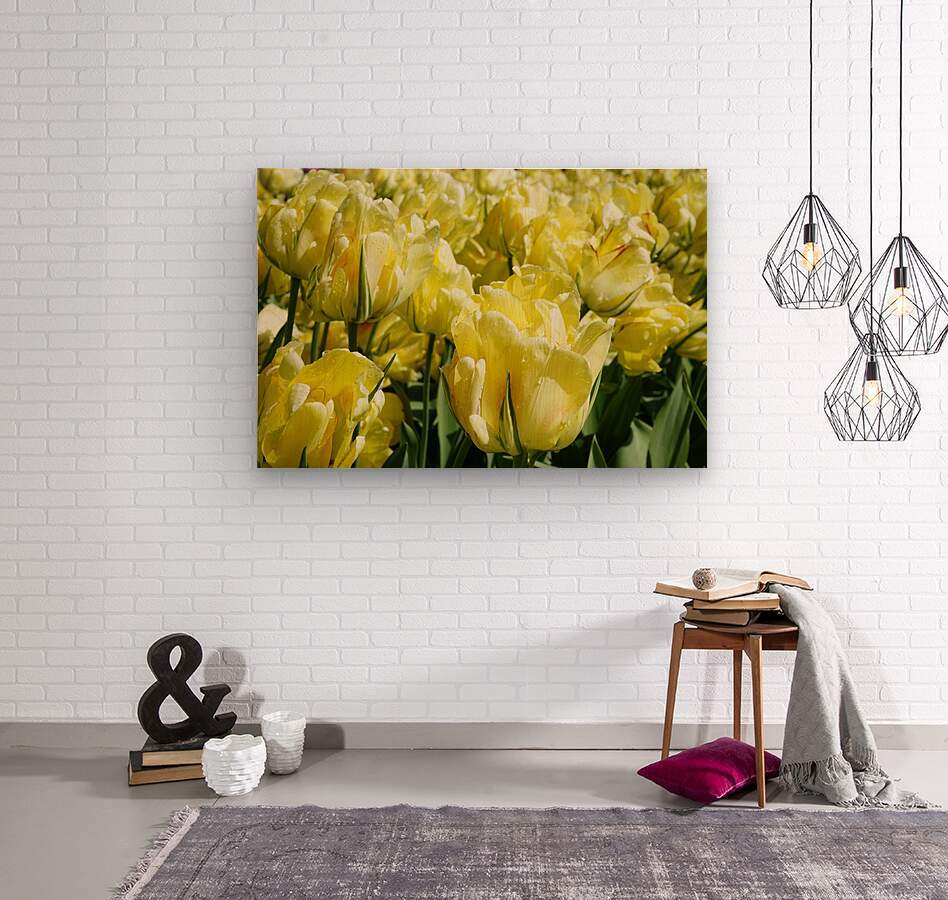 Tulips of the Netherlands 1 of 7  Wood print