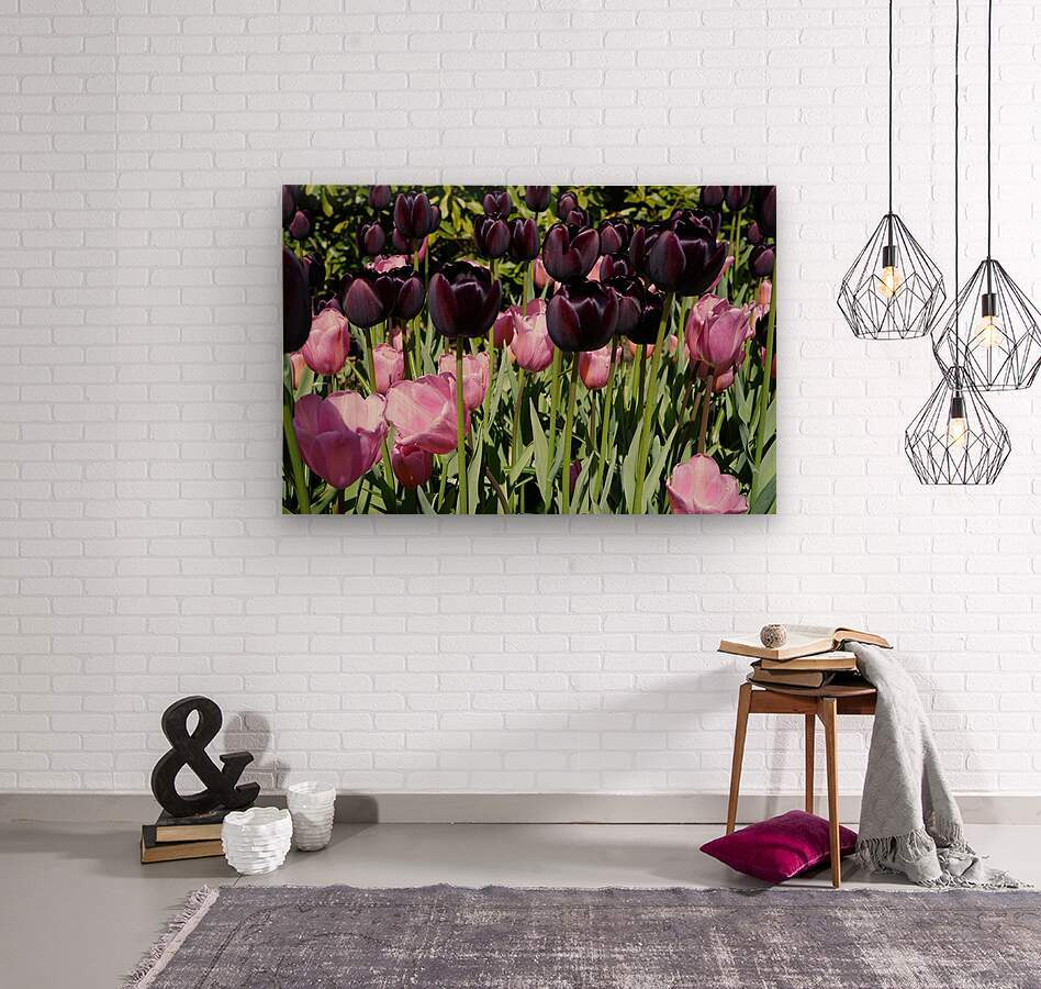 Spring Blooms of Holland 5 of 8  Wood print