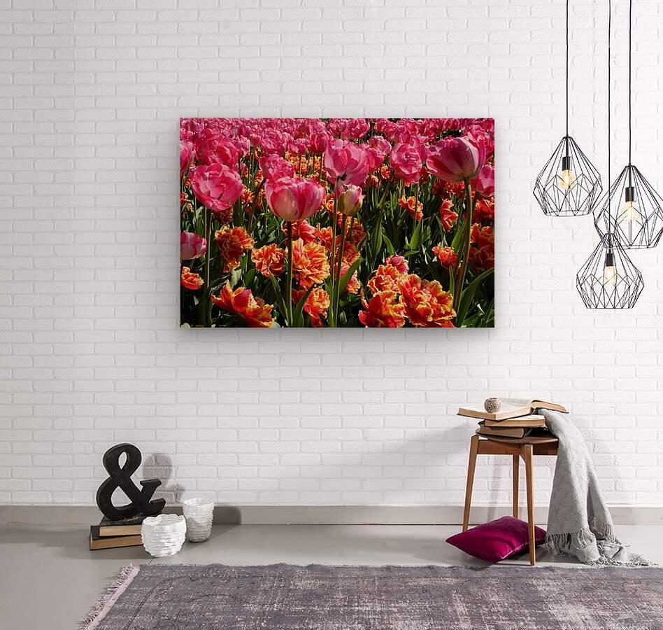 Pink & Orange  Wood print