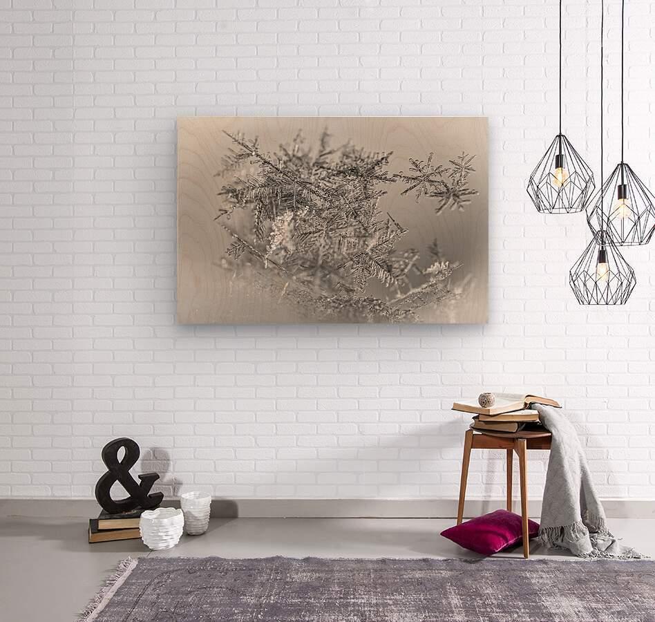 Pointe  Wood print