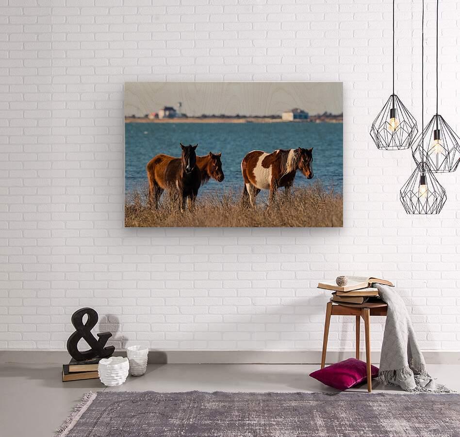 Wild Horses ap 2796  Wood print
