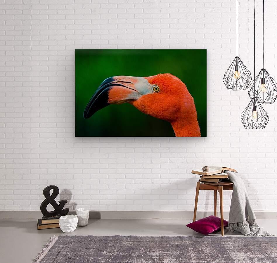 Flamingo Portrait ap 1946  Impression sur bois
