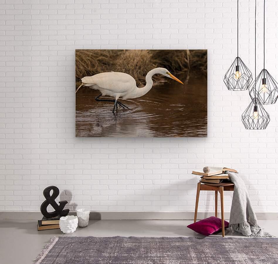 Great White Egret ap 2802  Impression sur bois