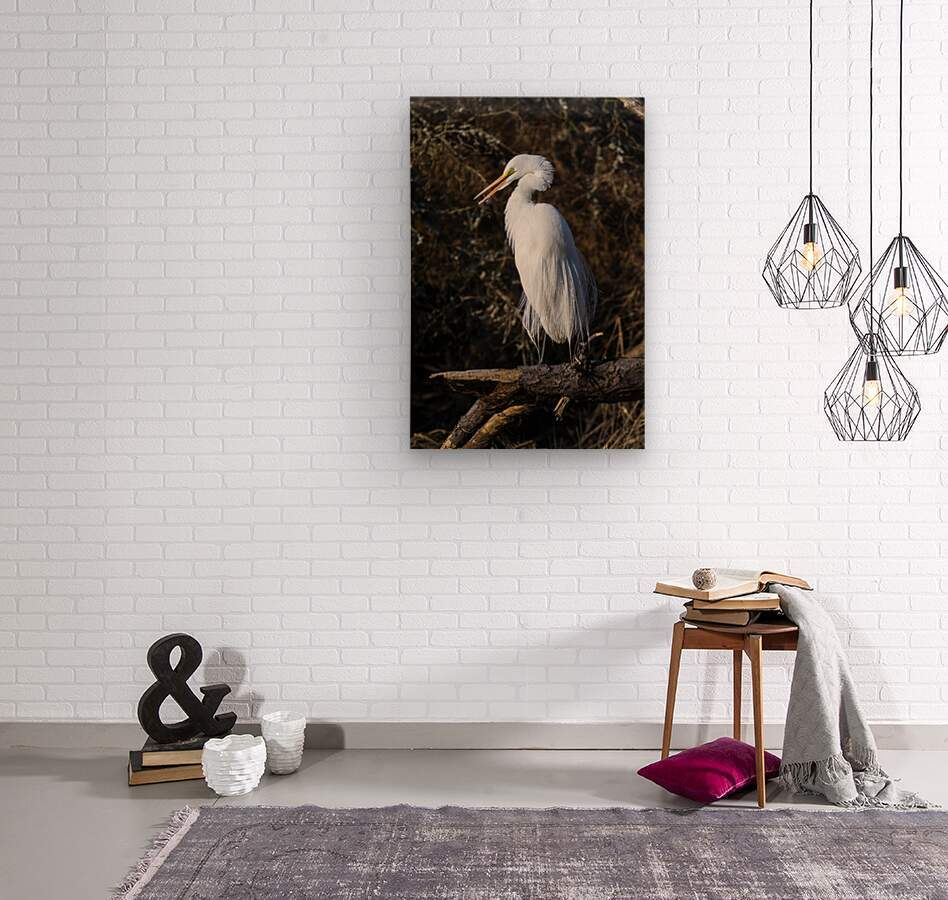 Great White Egret ap 2765  Wood print