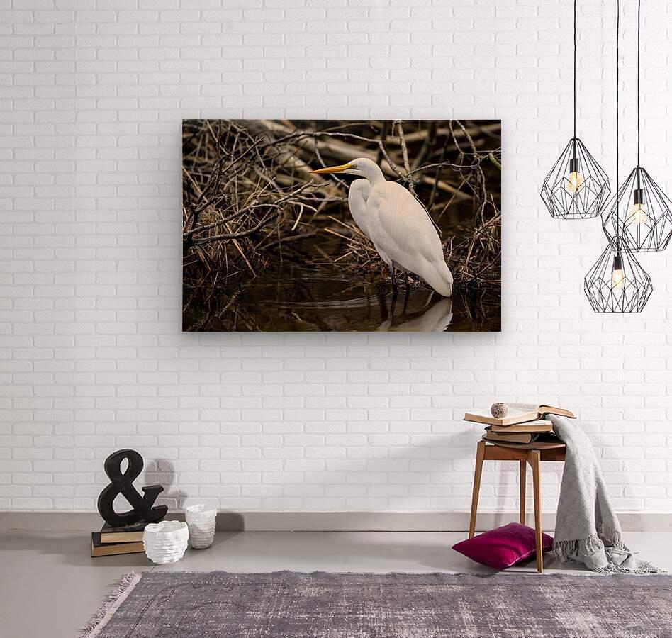 Great White Egret ap 2807  Impression sur bois
