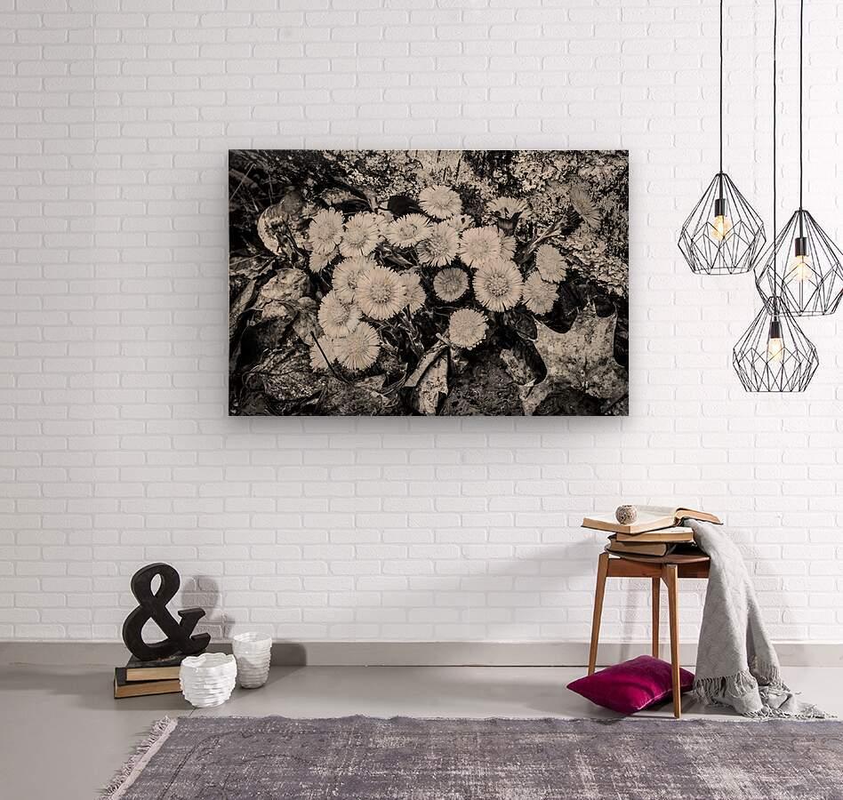 Flowers ap 2222 B&W  Wood print