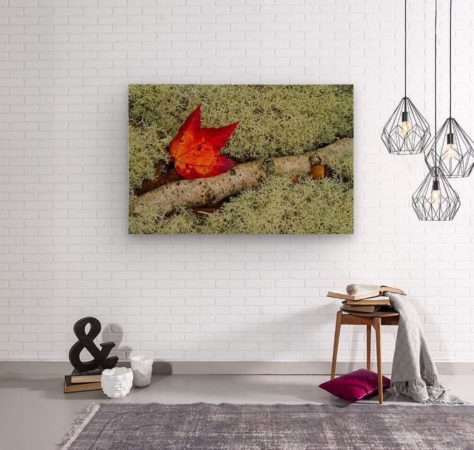Maple Leaf ap 1555  Wood print