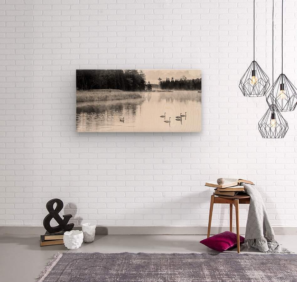 Swan Family ap 2694 B&W  Wood print
