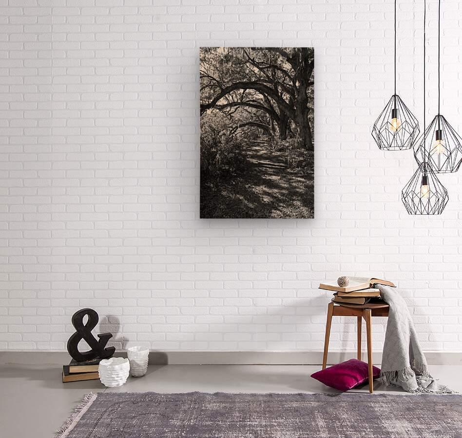 Nature Trail ap 2081 B&W  Wood print