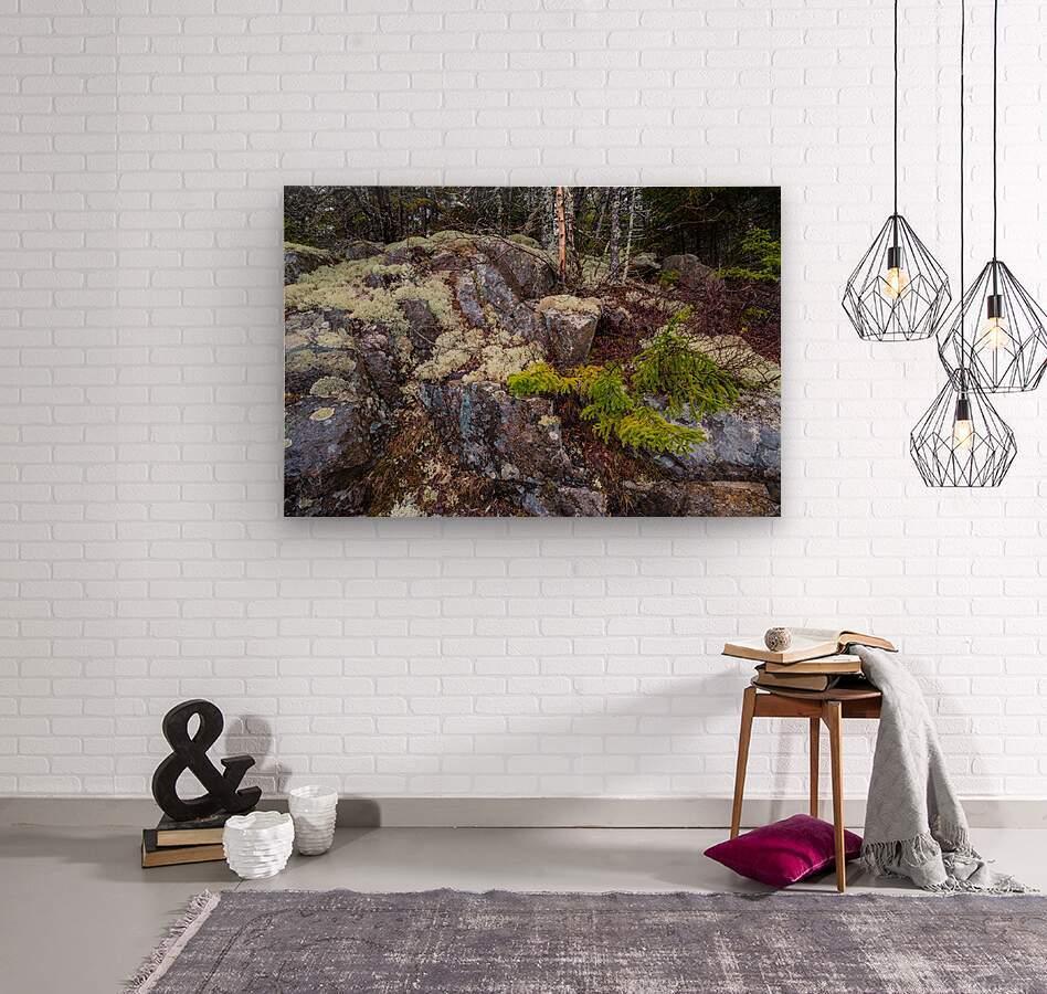 Moss   Lichen ap 2294  Wood print