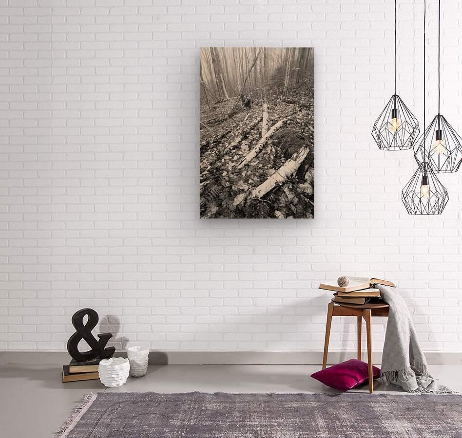 White Birch ap 2186 B&W  Wood print