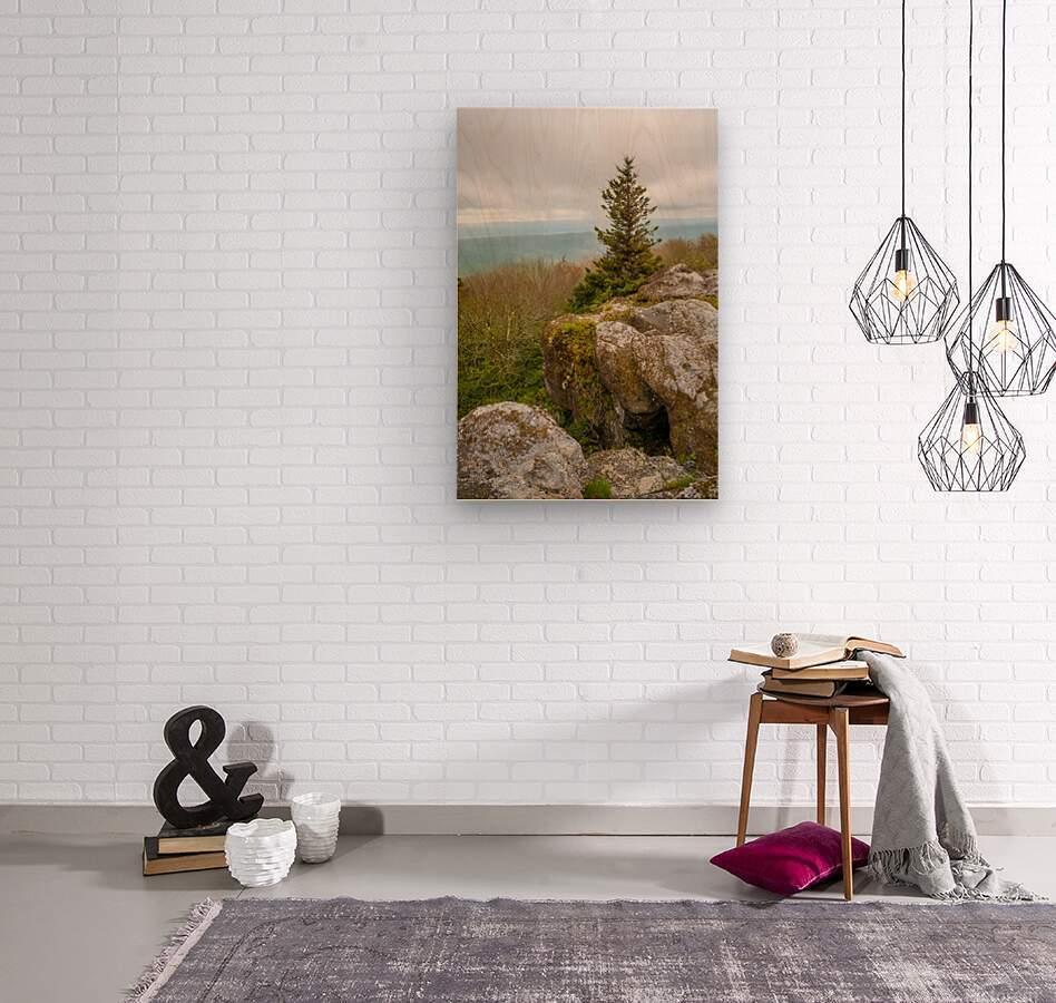 Hanging On ap 2943  Wood print