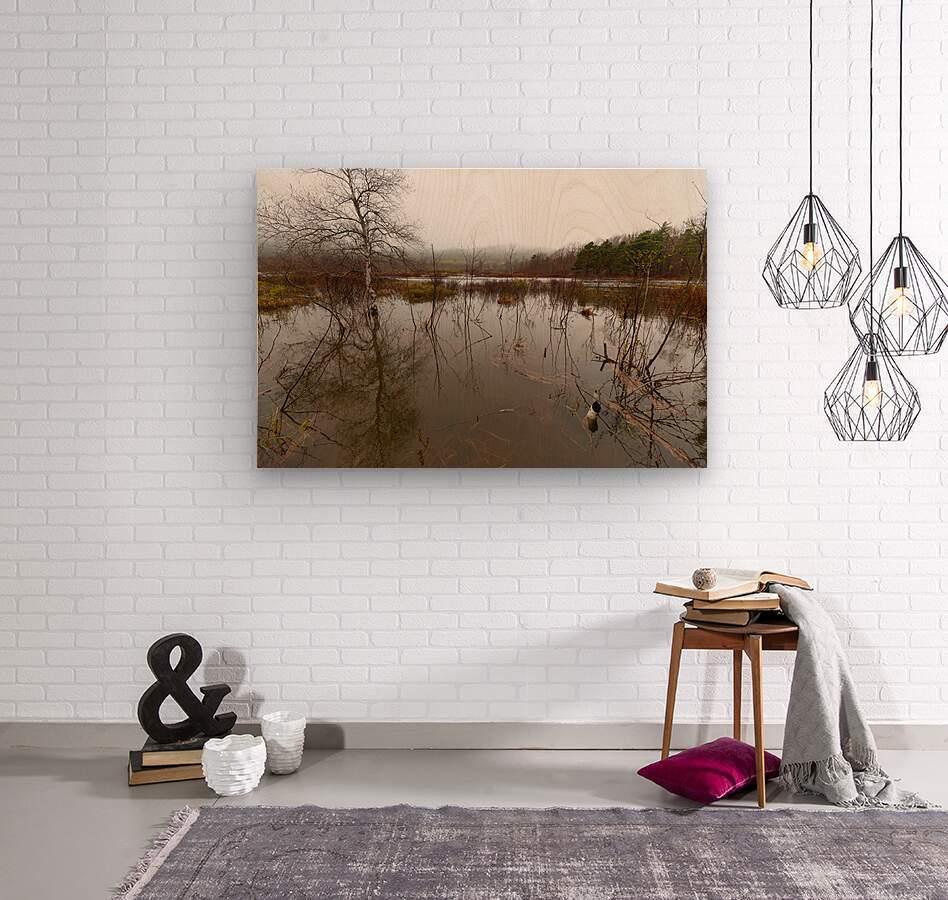 Beaver Pond ap 2357  Wood print