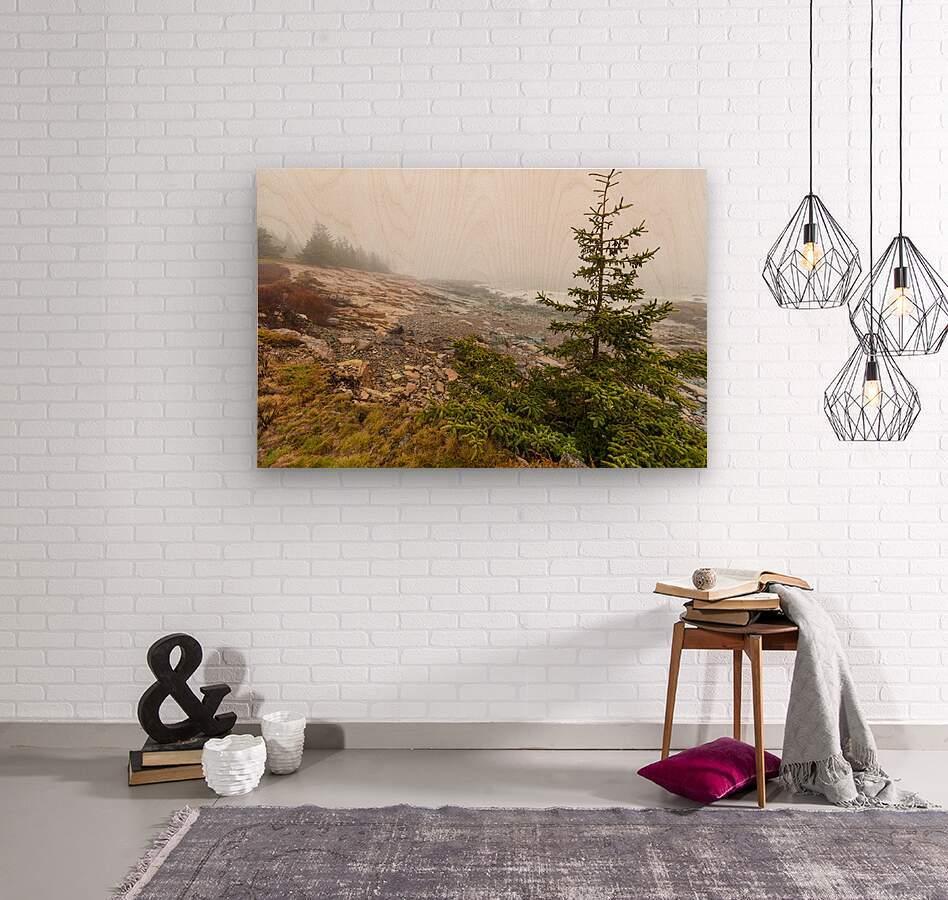 Lone Pine ap 2284  Wood print