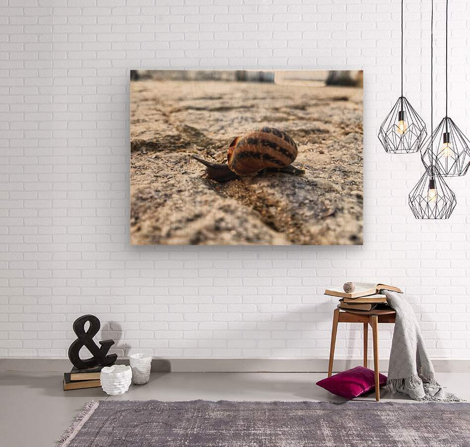 Little snail in the village of Portugal  Wood print