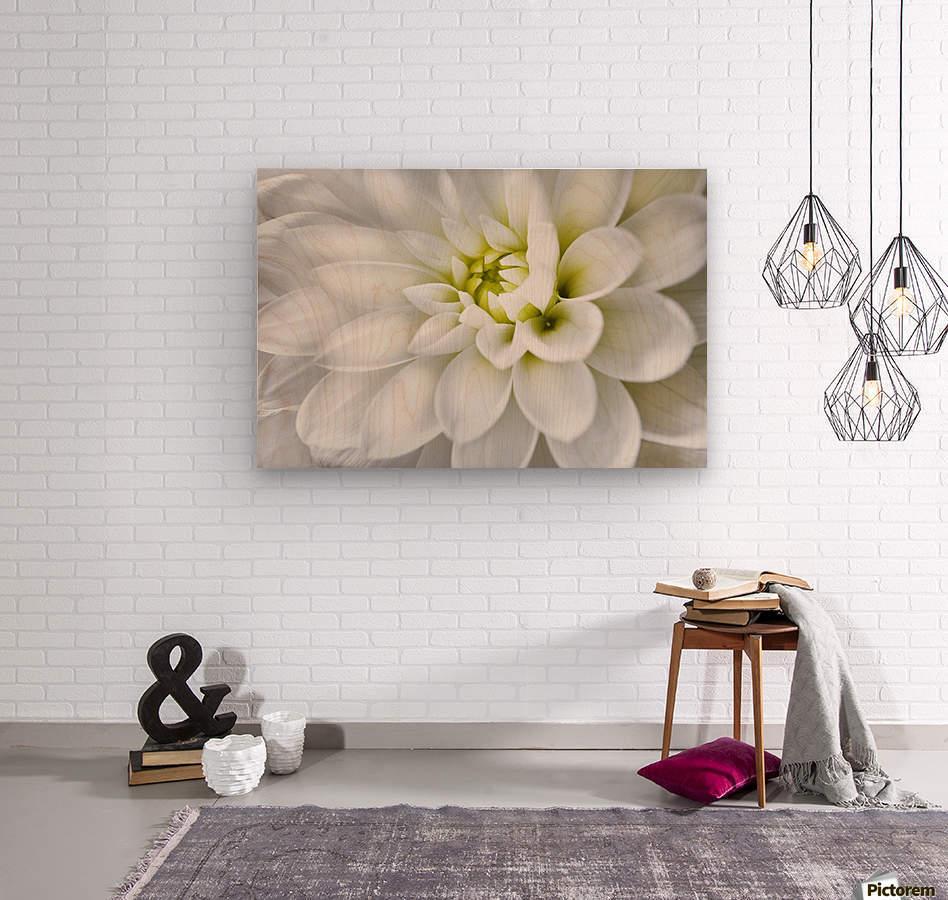 White Dahlia  Wood print
