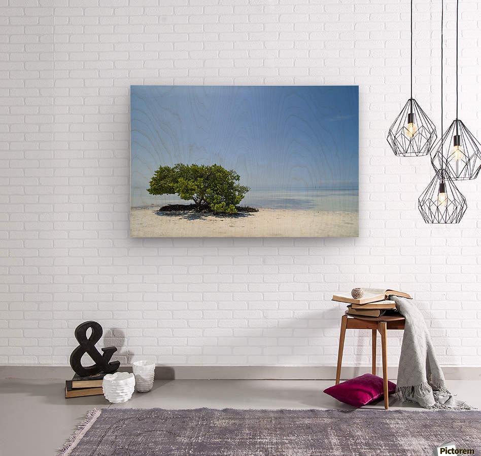 FLORIDA KEYS Lonely Tree  Wood print