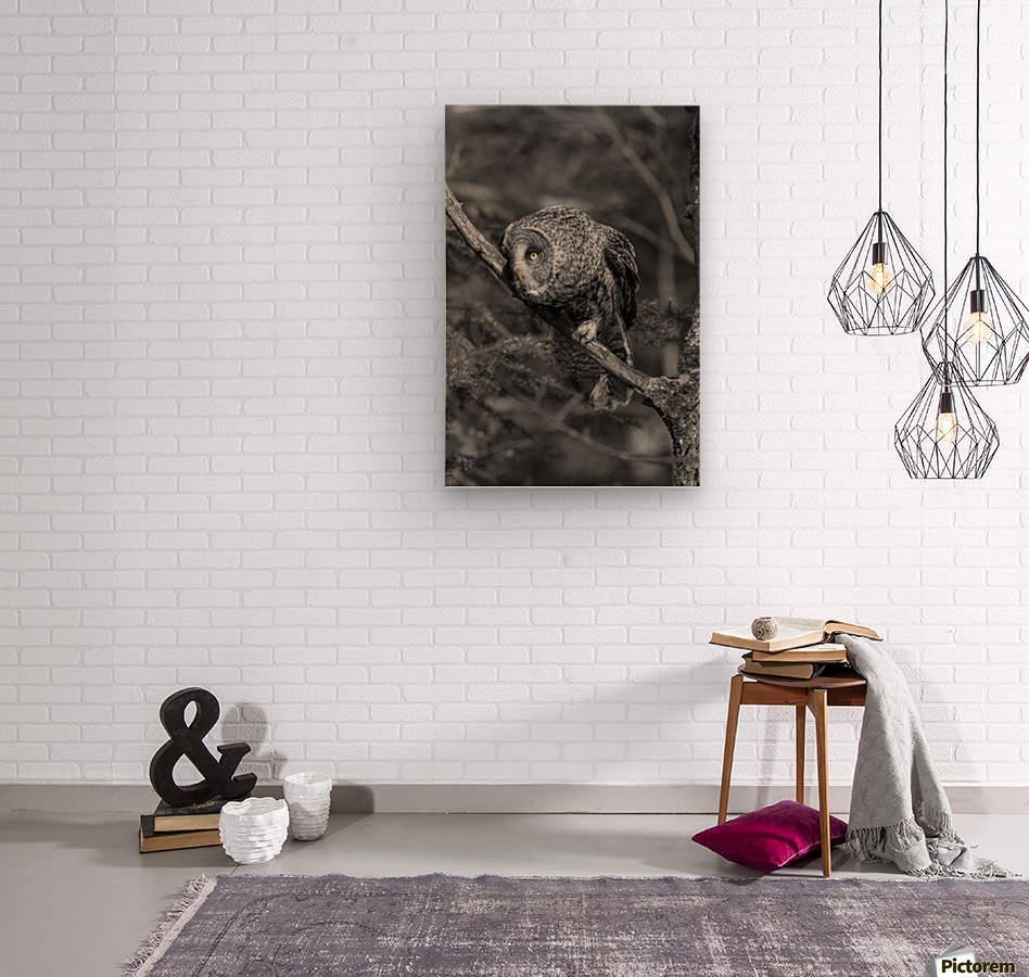 Pounce  Wood print