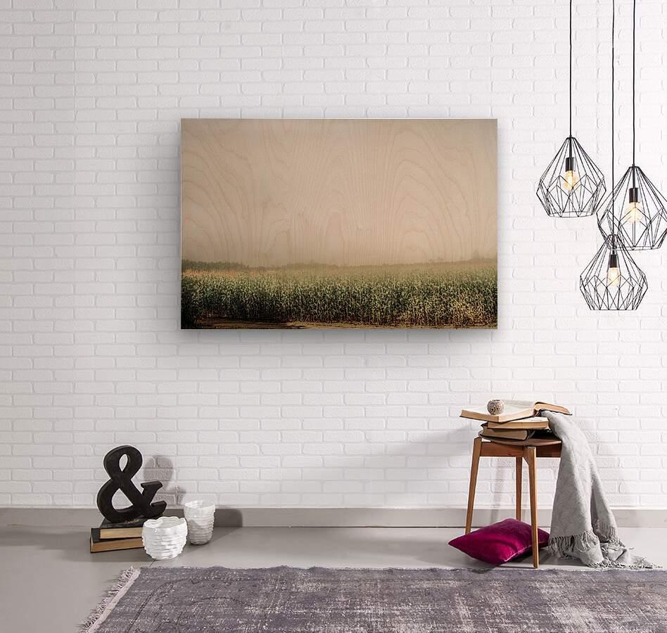 Summer Dust Cornfield  Wood print