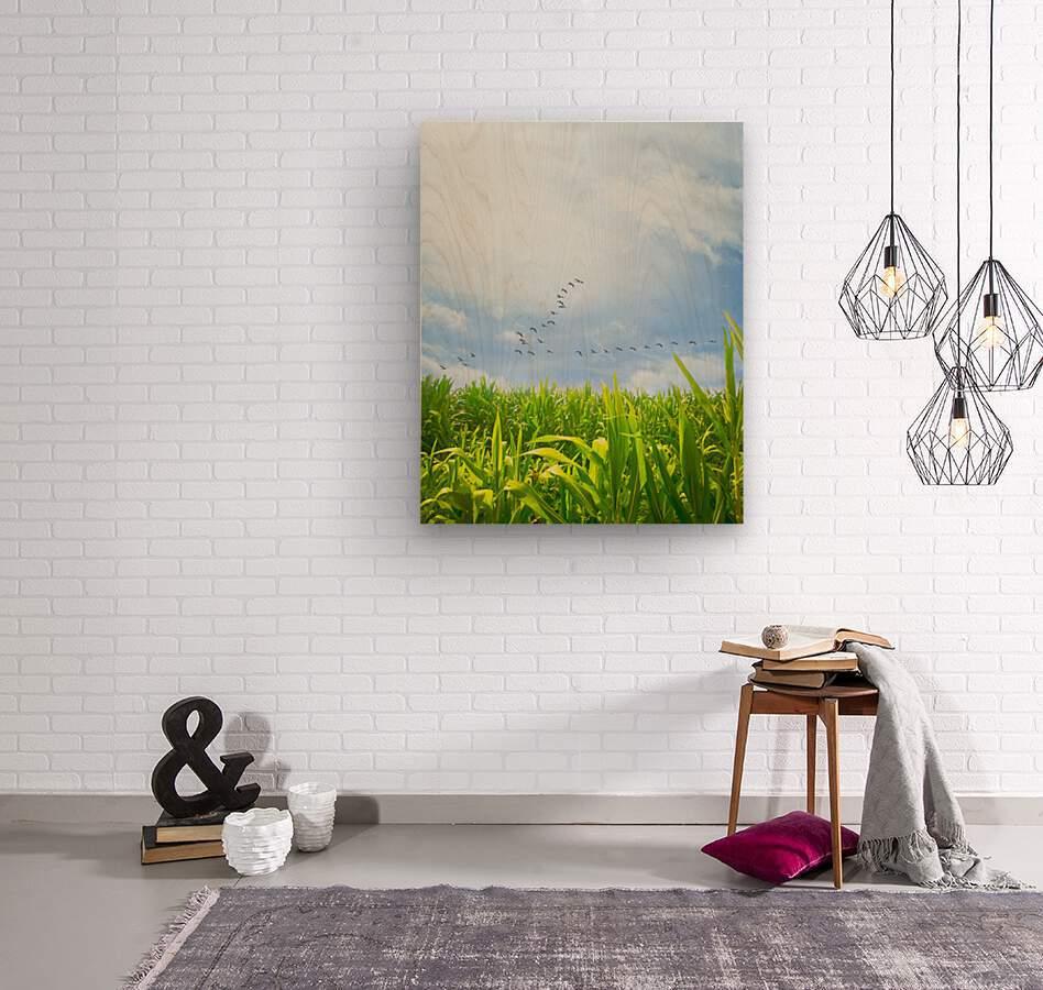 Midsummer Cornfield  Wood print