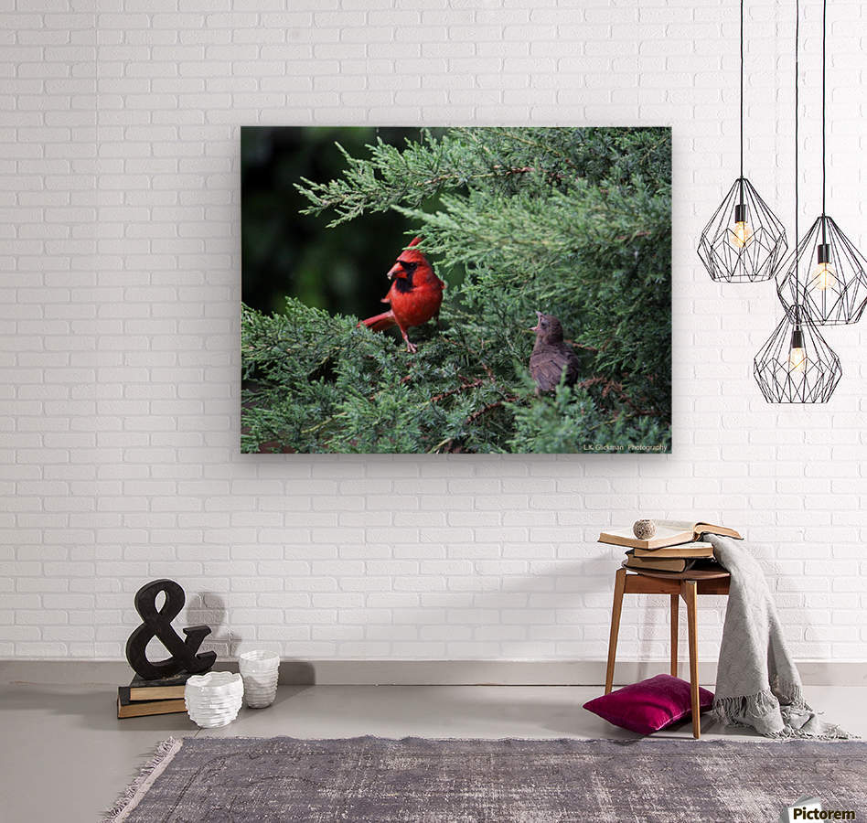 cardinal dad feed5  Wood print