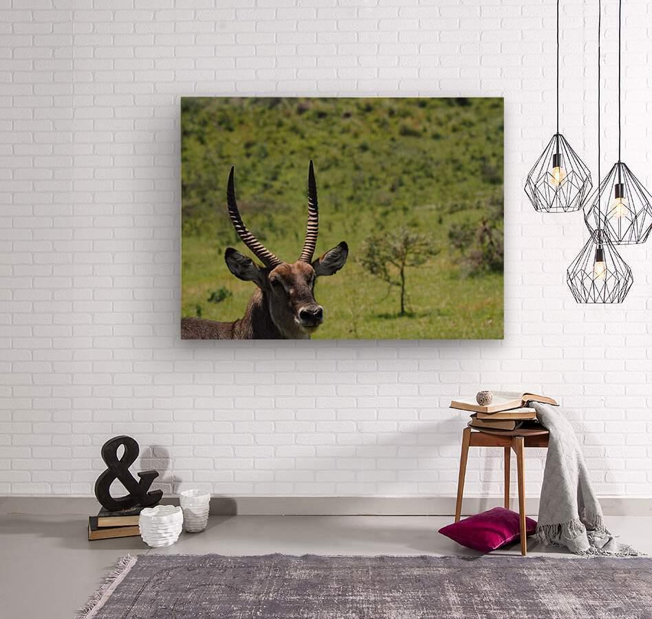 D8061889 B94D 4585 85A6 654F34B6CEB0  Wood print