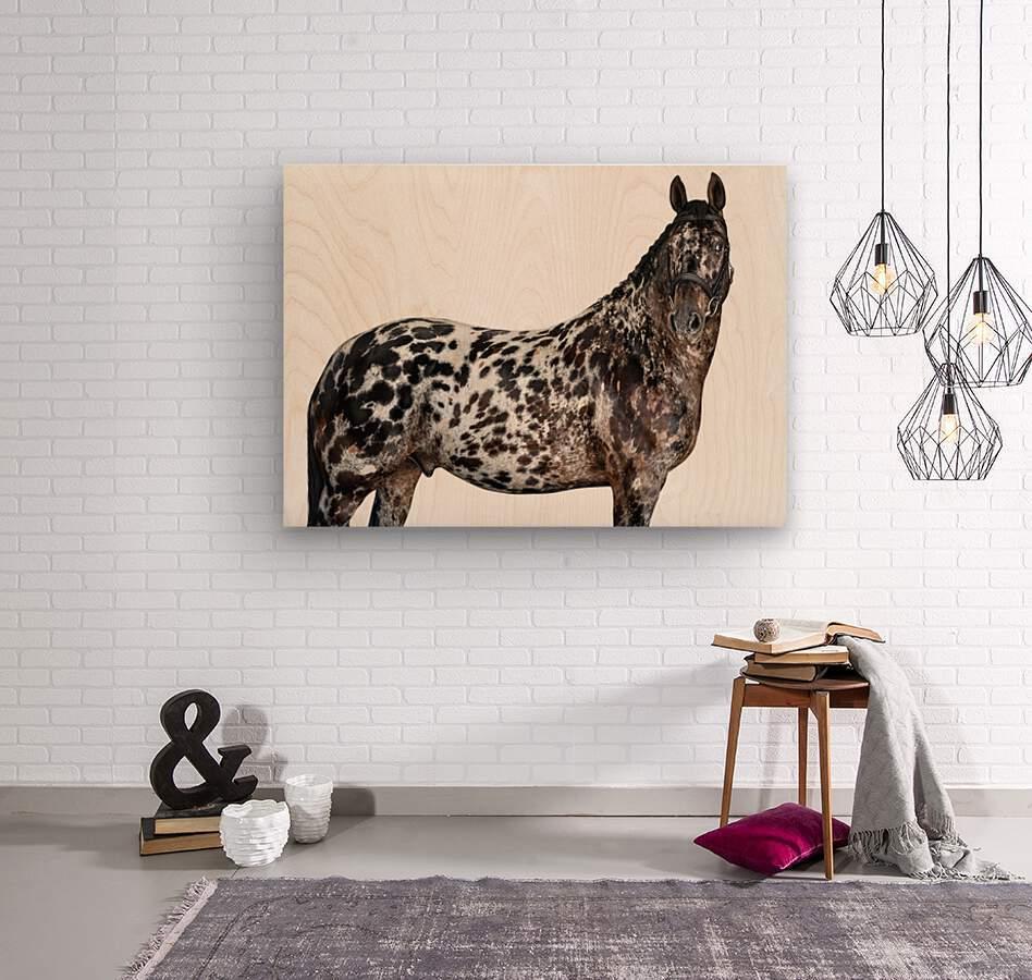 Spotted Horse Portrait  Wood print