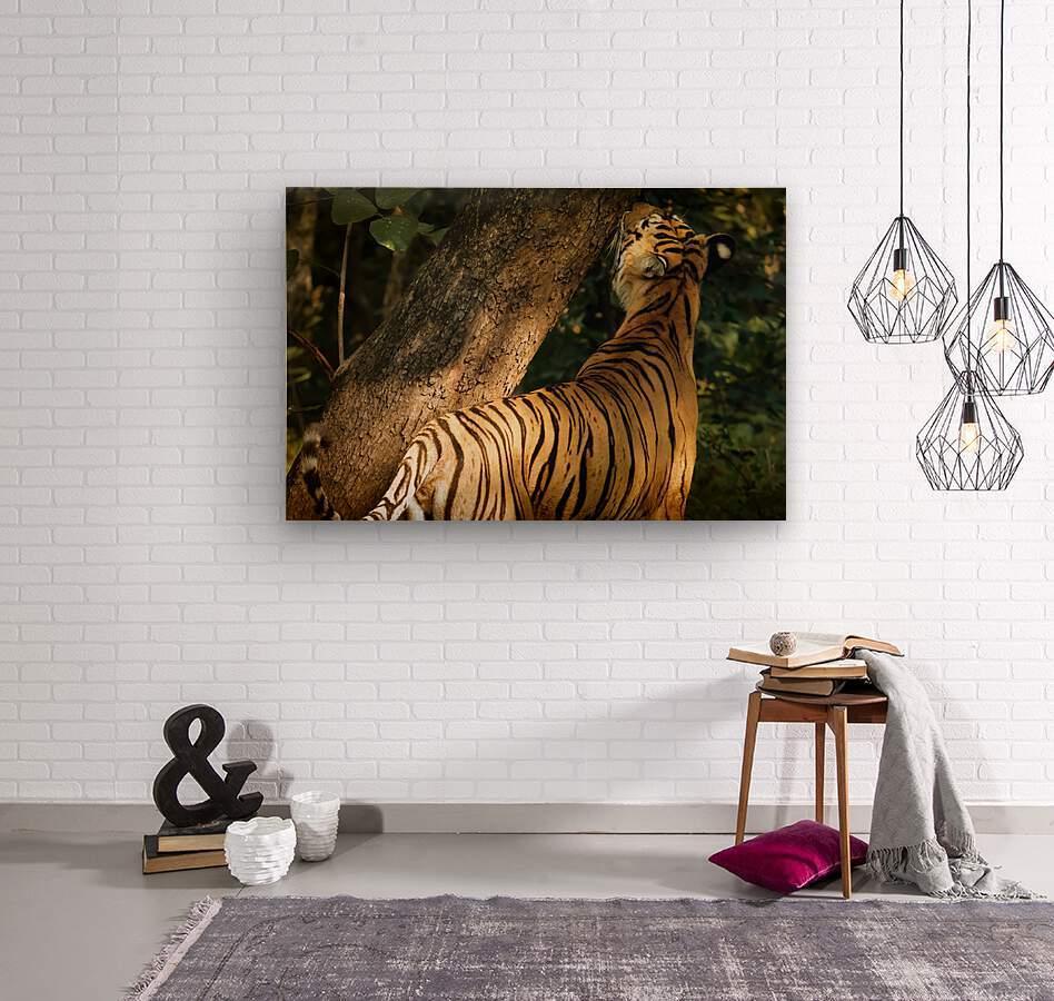 Indian Tiger  Wood print