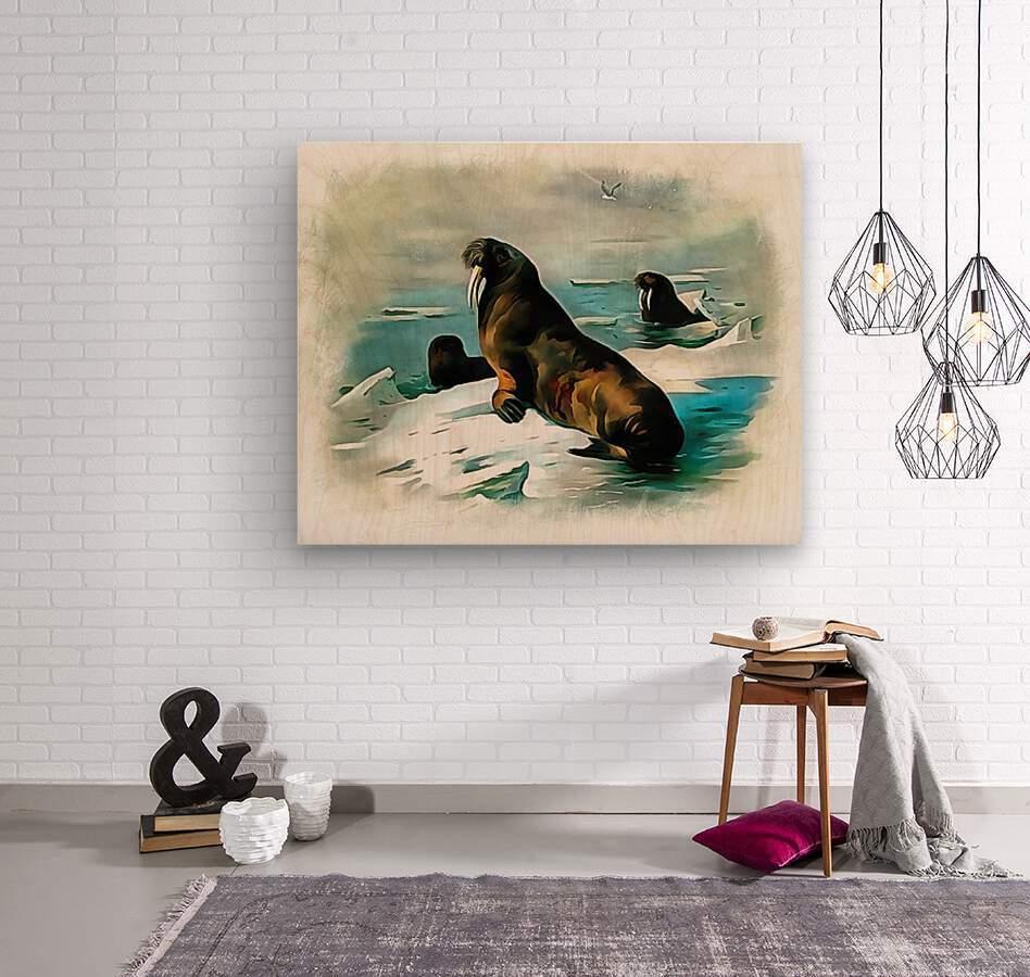 Walrus Illustration  Wood print