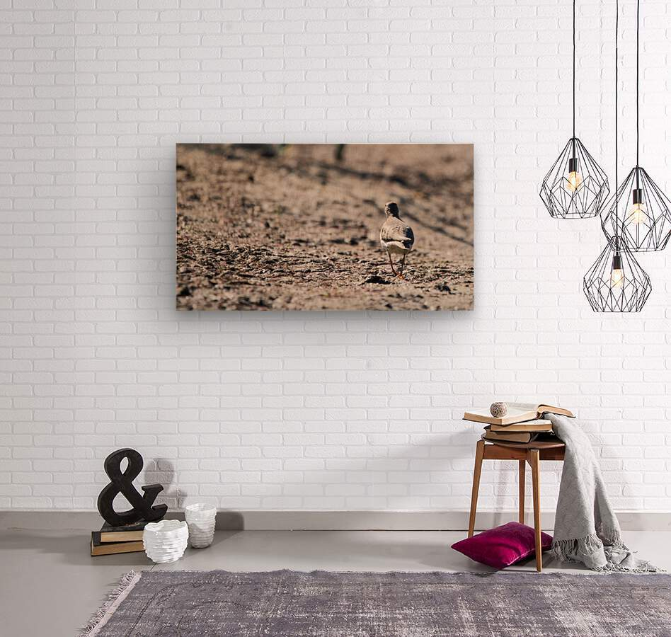 Lonely Sandpiper  Wood print