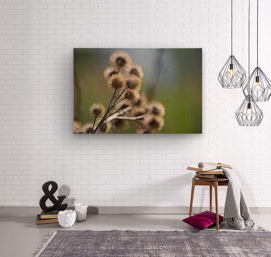 Burdock Bouquet  Wood print